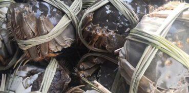 大闸蟹怎么保存才不死?