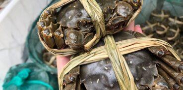 大闸蟹为什么叫大闸蟹?