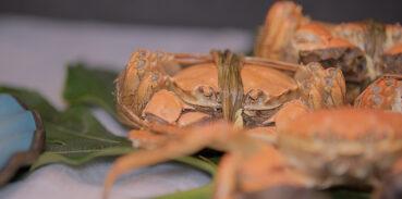 大闸蟹属于海鲜吗?