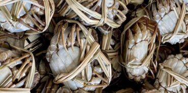 大闸蟹放冰箱冻死了能吃吗?