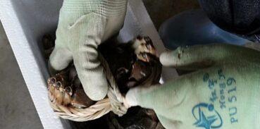 大闸蟹礼盒能放几天不会死?怎么保存?