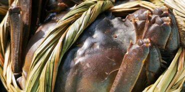 江苏哪些湖产大闸蟹比较多?
