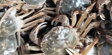 大闸蟹1688和2588区别