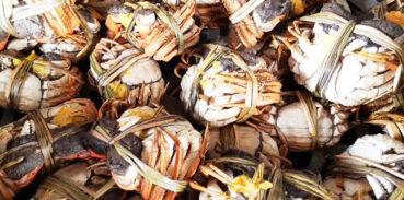紫苏在大闸蟹中的作用有哪些?