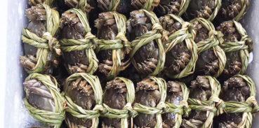 大闸蟹能出口进入香港市场吗?