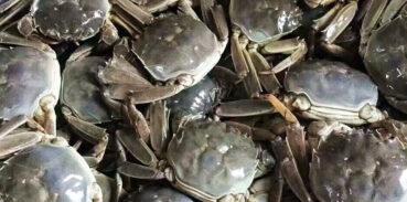 当天死的大闸蟹能吃吗
